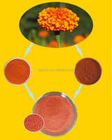 marigold flower extract lutein beadlet, 10%-20%