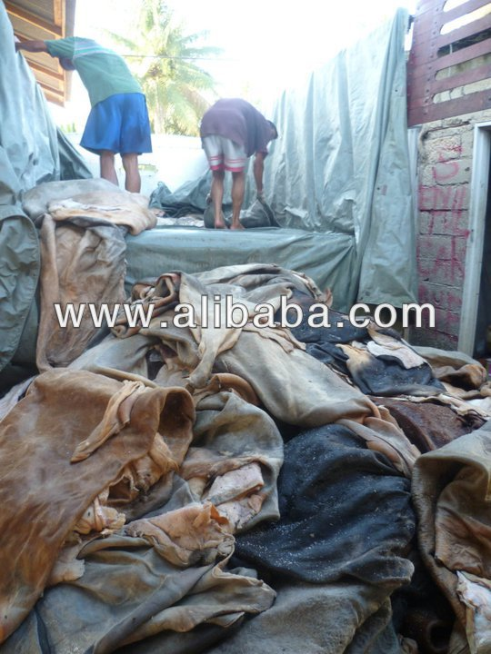 Wet salted hides from Venezuela