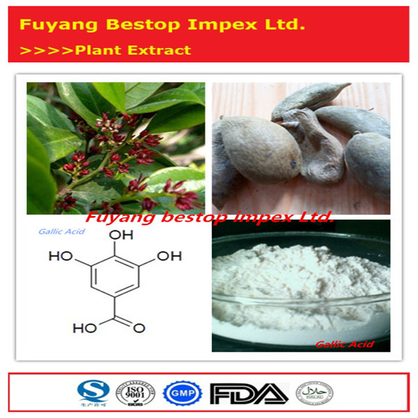 Wu Bei Zi Food Grade 100% High Purity Galla Chinensis P.e