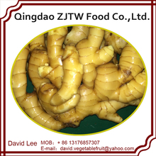 High Quality Ginger For Buyer Of Ginger