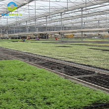 Hot sell industrial economical multi span greenhouse