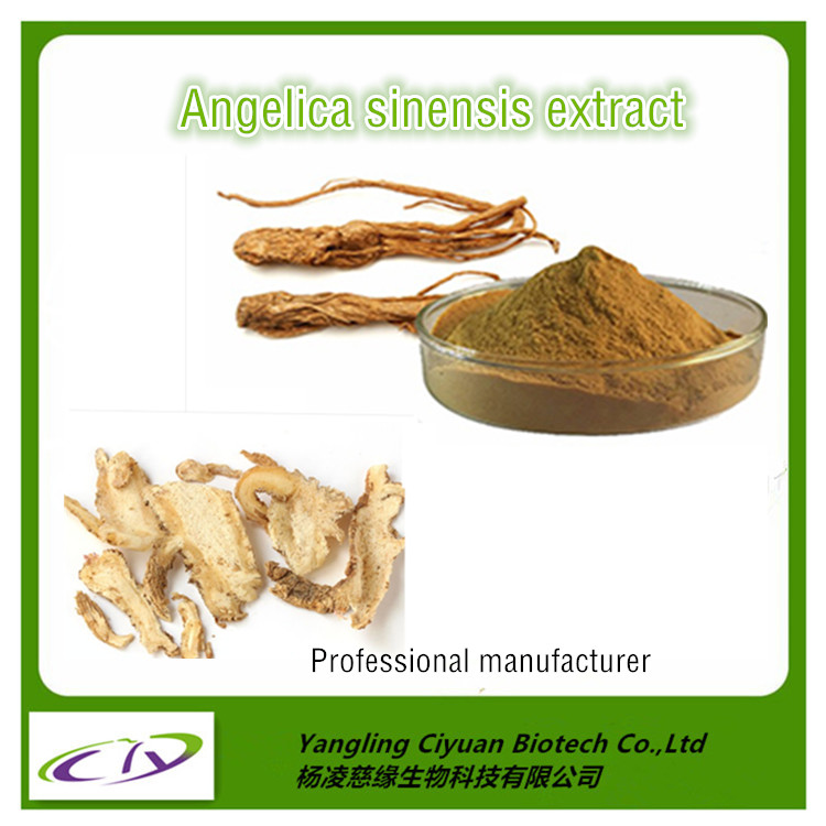 Women health care chinese herbal extract angelica archangelica root extract,dong quai extract powder 10:1