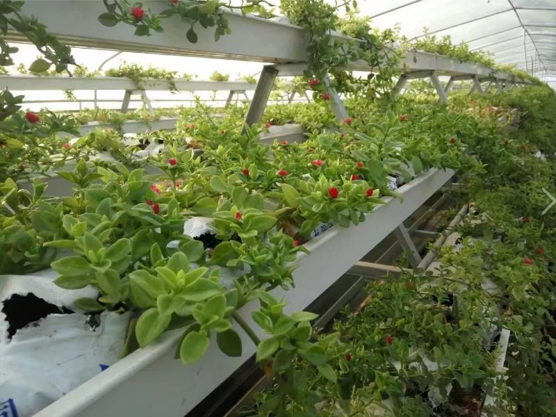 PVC plastic Hydroponics cultivation bag Gutter channel for Tomatoes and Melon