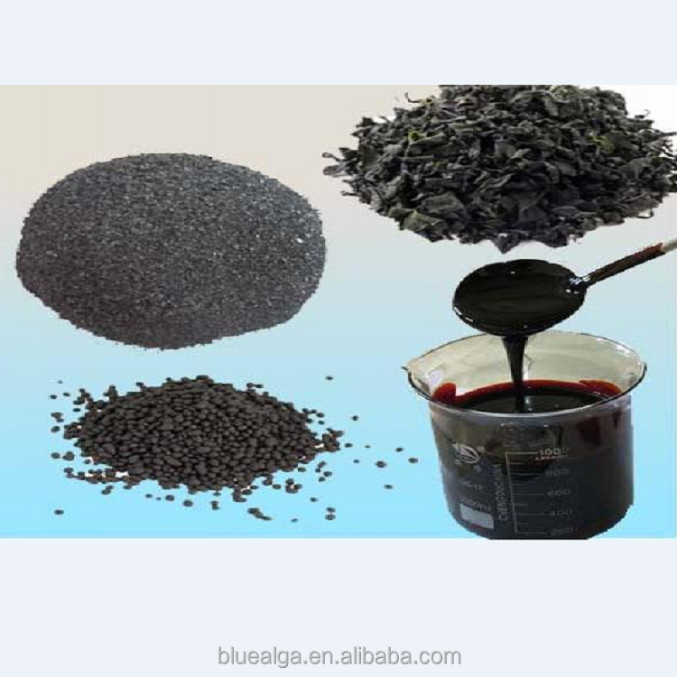 foliar spray water soluble seaweed extract liquid fertilizer