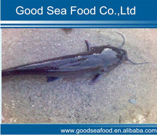 High Quality Seafood Product Natural Whole Frozen Catfish