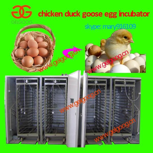 chicken egg laying machine
