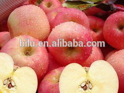 high quality grade apple fiji manufactured in China