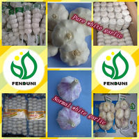 Shandong White Fresh Garlic Chinese Natural Garlic