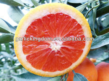 Sell Chinese red pulp navel orange
