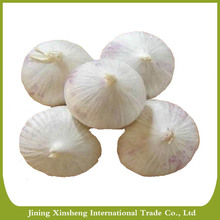 China new crop natural fresh solo garlic