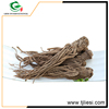 wholesale china trade doubleteeth pubescent angelica root p.e