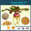 Top sale natural aphrodisiac Maca root Extract powder