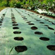 garlic and onion PP plastic weed control mat/woven black anti grass cloth with holes
