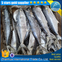 fresh mackerel mackerel price frozen seafood IQF spanish mackerel