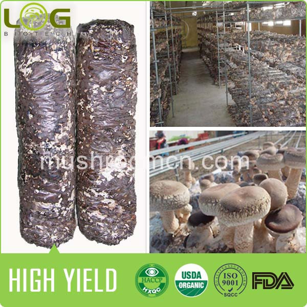 China bags for mushroom substrate or spawn