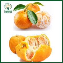 Chinese mandarin orange tangerines ponkan