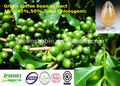 High Quality 15%,45%,50% Total Chlorogenic Acids Green Coffee Bean Extract
