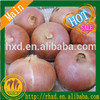 /product-detail/good-quality-best-price-hot-selling-fresh-chinese-onion-60462665068.html