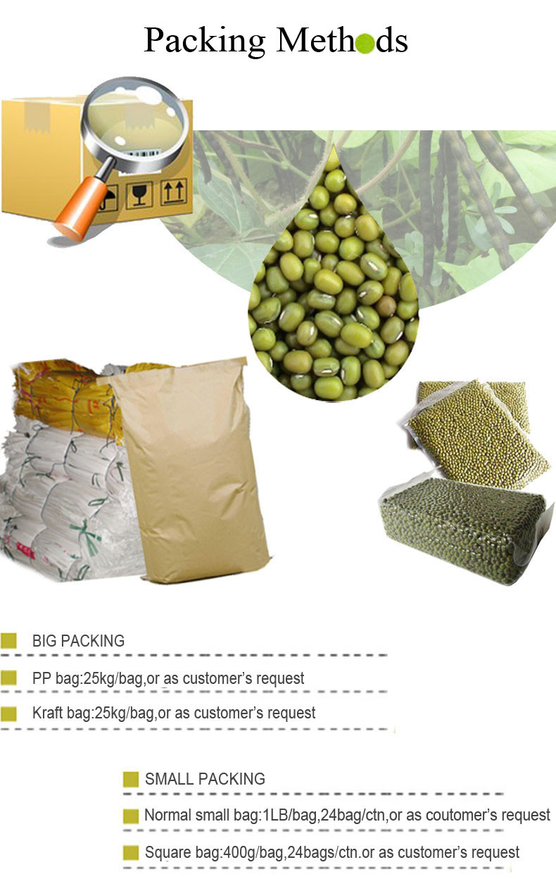 common green mung bean for food manufacturing
