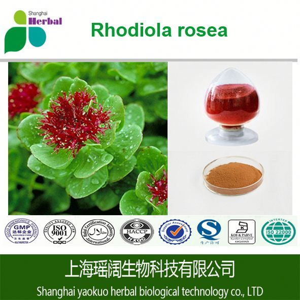 Free sample HACCP KOSHER FDA rhodiola rosea extract,HPLC 1% salidroside 3% rosavin powder extract rhodiola rosea