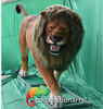 /product-detail/co-creationarts-zoo-decoration-resin-statue-life-size-lion-model-60764906489.html