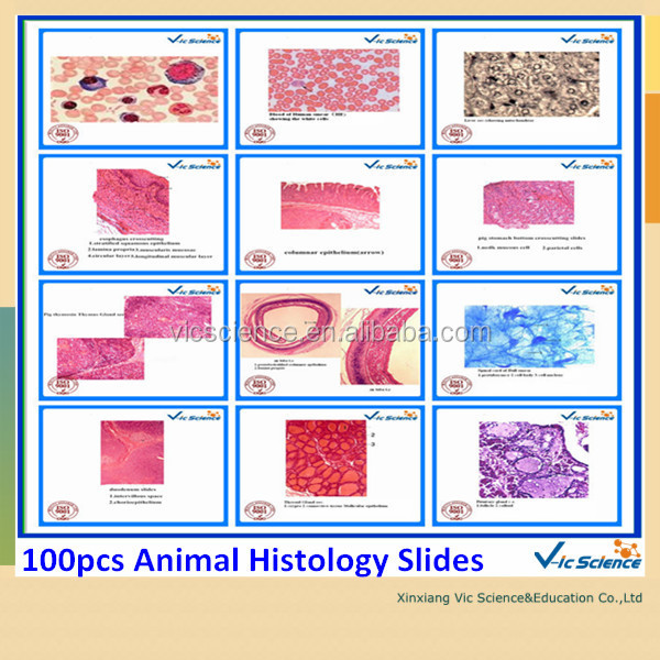 an analysis of animal histology How to prepare histology slides is not generally required knowledge for animal & wildlife biological material for microscopy or other analysis.