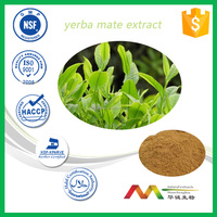Professional Manufacturer Natural Polyphenol Yerba Mate Extract