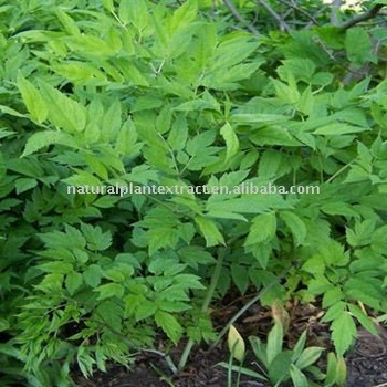 Black Cohosh Triterpene Glycosides