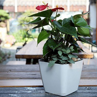 Indoor Mini Plastic Flower Pot For