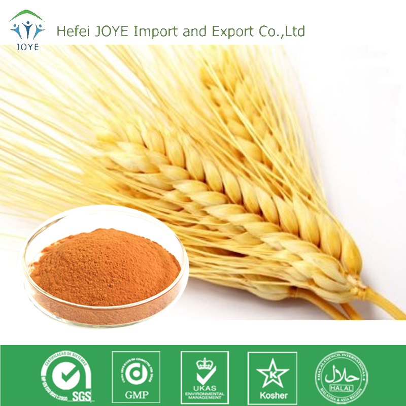 Hot Sale Natural Barley malt Extract powder in bulk