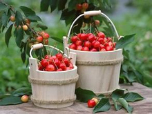 100% Natural Acerola Cherry Extract