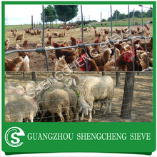 Chicken farms poultry heavy wire mesh netting chicken wire dog fence