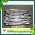 frozen spanish mackerel fish prices