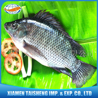 Bulk frozen foods tilapia black fish