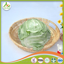 fresh cabbage in bulk for sale