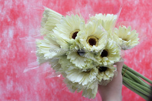 Fresh crazy selling gerbera flowers from india