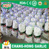 ginger and garlic export company in China
