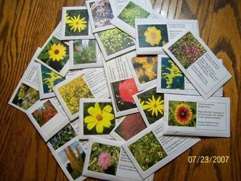 Wildflower Seed Packs