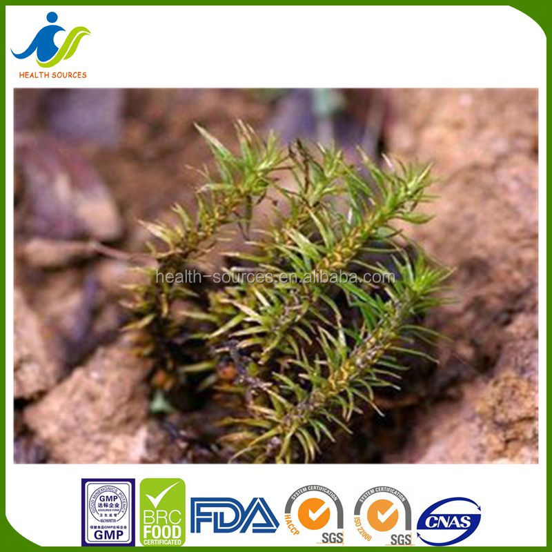 natural herbal finest and high purity Huperzia Serrata Extract Huperzine A powder