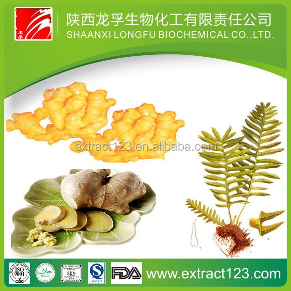 High quality ginger dry extract extraction of ginger oleoresin