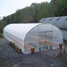 Agriculture PE Film Commercial Single Span Tunnel Greenhouse for Sale