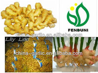 HOT!!! China Ginger Buyer from China, supply all the year