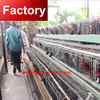 China wholesale metal layer chicken cages for Kenya