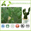 100% Natural Pure Cactus Extract/Prickly Pear Extract