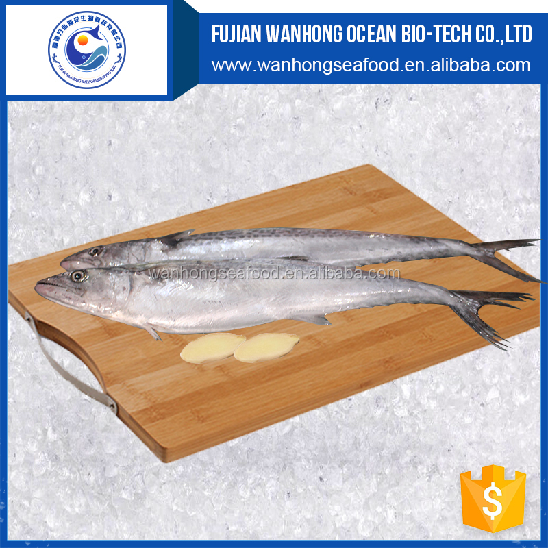 New catching frozen style whole round Spanish Mackerel / King fish / Seer fish on sale frozen seafood