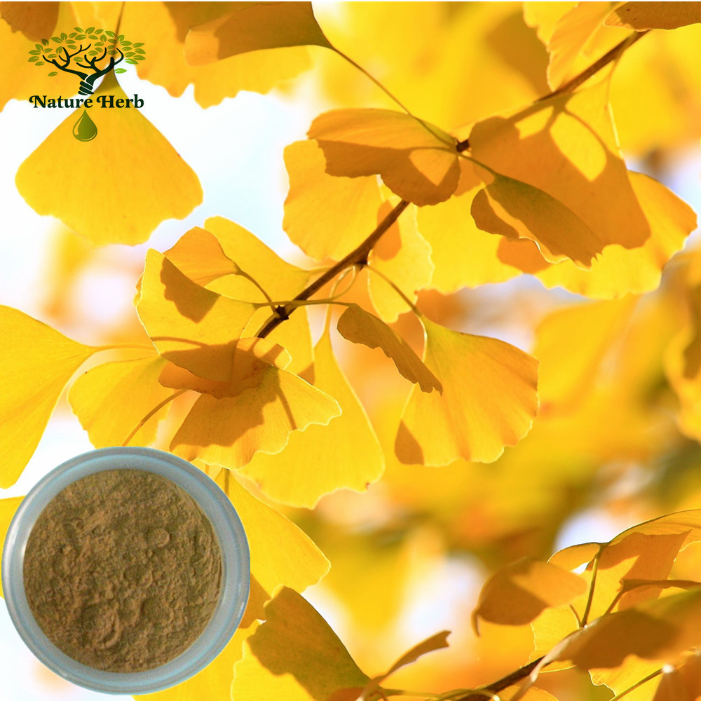 Manufacturer Offer Ginkgo Biloba Leaves Extract/24% Flavonoids/6% Total Terpene Lactones
