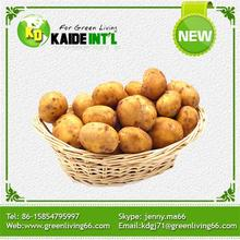 2016 New Best Fresh Potato Potatoes
