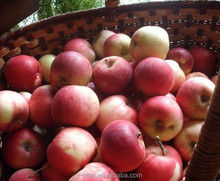 Exported Fresh Red Fuji Apple from Gansu