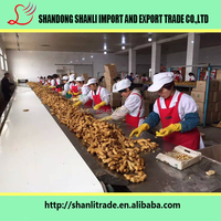 Buy fresh China ginger ,2016 new harvest