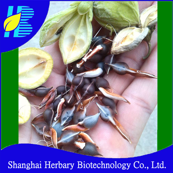 2017 Professional supplier supply agarwood seeds for sale